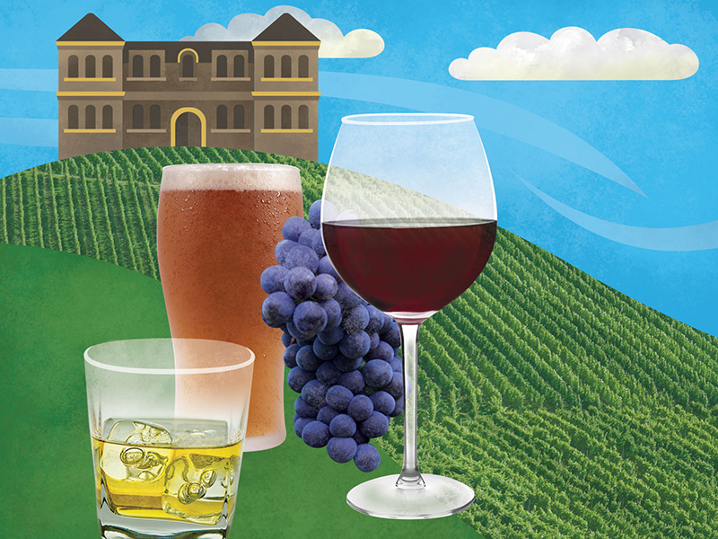 Illustrated infographic artwork and photography, wine, beer and liquor industry